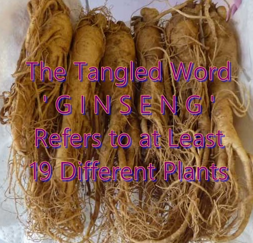 How Many Different Herbs Are Called 'Ginseng'? ~19 Plants